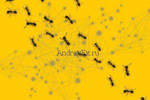 Анализ поведения колонии муравьев может дать лучшие алгоритмы для сетевых коммуникаций