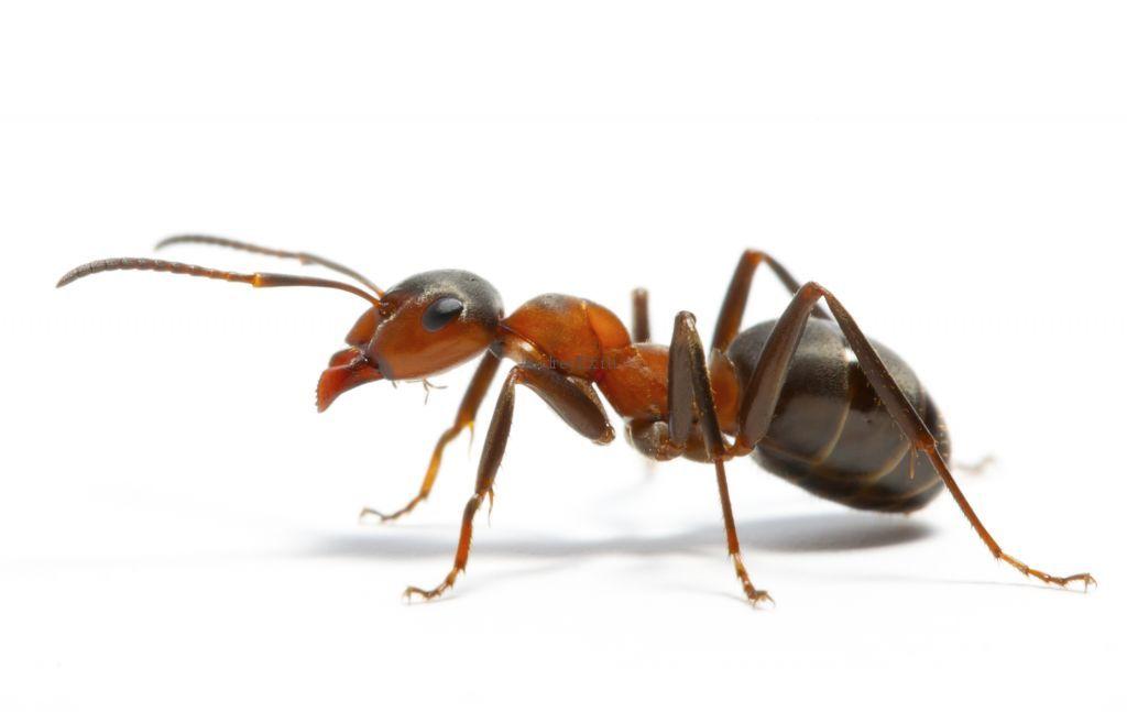 муравьи и компьютерное моделирование