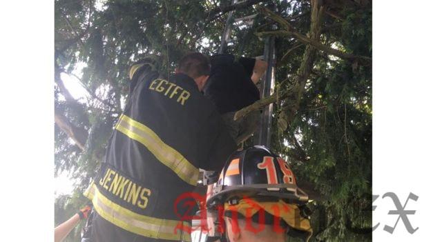 Отдел пожарной охраны Нью - Джерси спасает женщину в дереве