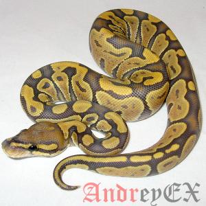 Python 3 - Настройка окружающей среды