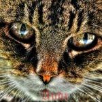 Команда Cat в Linux. Основные и расширенные примеры